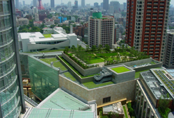 Building Green Roof